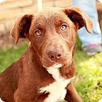 Adopt A Pet :: Blaire - Lancaster, OH