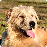 Adopt A Pet :: Scout - New Canaan, CT