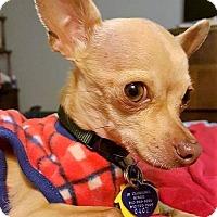 Adopt A Pet :: Frito - AUSTIN, TX