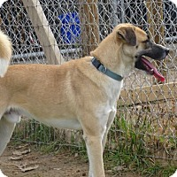 Adopt A Pet :: Campbell - Delaware, OH
