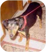 Terrier (Unknown Type, Medium) Mix Dog for adoption in Tahlequah, Oklahoma - Greta