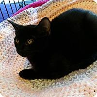 Adopt A Pet :: Jenny - Seminole, FL