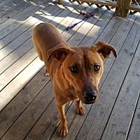 Adopt A Pet :: Kahlua - Valley, AL
