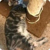 Adopt A Pet :: Milo - McHenry, IL