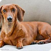 Adopt A Pet :: Nicky - Anaheim, CA