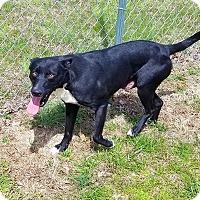 Adopt A Pet :: Lady - Kingston, TN