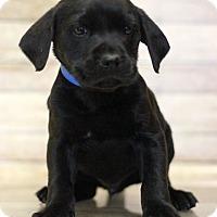 Adopt A Pet :: Kygore - Waldorf, MD
