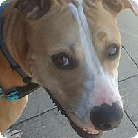 Adopt A Pet :: Cesar - Newport, NC