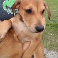 Adopt A Pet :: Matt - Gainesville, FL