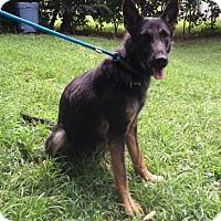 Adopt A Pet :: Ingrid - Portland, ME