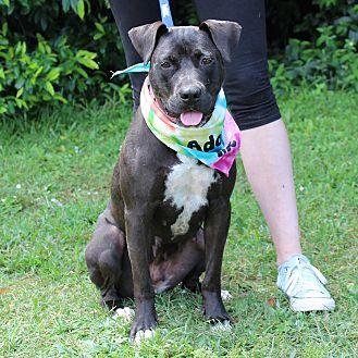 Labrador Retriever Mix Dog for adoption in McCormick, South Carolina - Roxy
