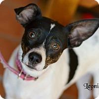 Adopt A Pet :: Leonie - Spring, TX