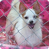Adopt A Pet :: Reba 2 - Vidor, TX