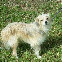 Adopt A Pet :: Greenlee - Missouri City, TX