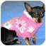 Photo 1 - Chihuahua Dog for adoption in Osseo, Minnesota - Princess