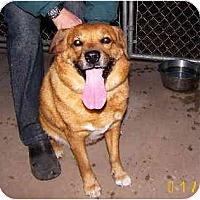 Adopt A Pet :: Toblerone - Scottsdale, AZ