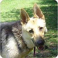 Adopt A Pet :: Allie - Pike Road, AL