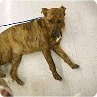 Adopt A Pet :: Sophie- new pictures - Glastonbury, CT