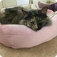 Adopt A Pet :: Clairabelle - Monroe, GA