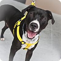Adopt A Pet :: Rico Suave - Holmes Beach, FL