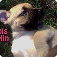 Adopt A Pet :: Janis Joplin - Houston, TX