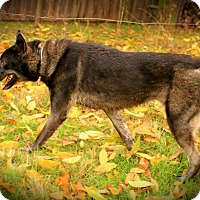 Adopt A Pet :: Dasha - Ashland, OR