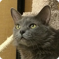 Adopt A Pet :: Bella - Winchester, CA