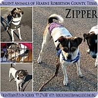 Adopt A Pet :: Zipper - Hearne, TX