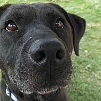 Adopt A Pet :: Sasha - Huntsville, AL