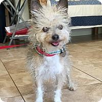 Adopt A Pet :: Einstein - Santa Ana, CA