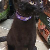 Adopt A Pet :: Starfire - Reston, VA