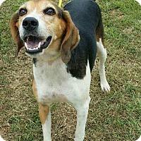 Adopt A Pet :: Sadie - Columbia, SC