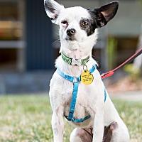 Adopt A Pet :: Mona - San Francisco, CA