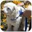 Photo 2 - Maltese Mix Dog for adoption in Berkeley, California - Harris
