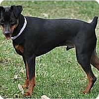 Adopt A Pet :: Easton - Minneapolis, MN