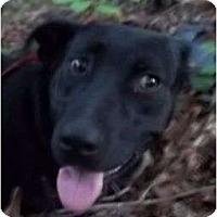 Adopt A Pet :: Edwin (reduce fee) - Plainfield, CT