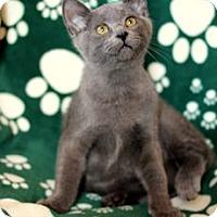 Adopt A Pet :: K-Indy3-Izzy - Colorado Springs, CO