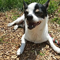 Adopt A Pet :: Buggs - Elizabethtown, PA