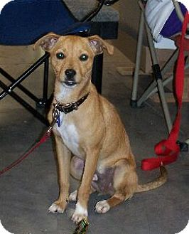 Terrier (Unknown Type, Medium) Mix Dog for adoption in Lafayette, Louisiana - M Mikey