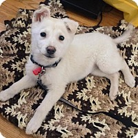Adopt A Pet :: Winter - Pending - Saskatoon, SK
