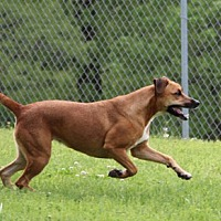Adopt A Pet :: Kassy Mae - Savannah, TN