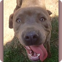 Adopt A Pet :: Dolly Parton 27470 - Pampa, TX