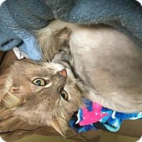 Adopt A Pet :: Granny - Hernando, MS