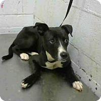 Adopt A Pet :: ELIZABETH - Atlanta, GA