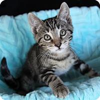 Adopt A Pet :: FRANCO - Newport Beach, CA