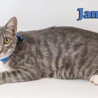 Adopt A Pet :: James - Fairhope, AL