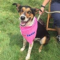 Adopt A Pet :: SIREN - Amherst, OH