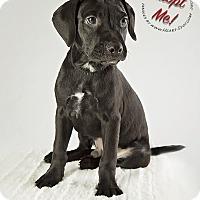 Adopt A Pet :: Joey - Gillsville, GA