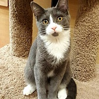 Adopt A Pet :: Laverne - Trenton, NJ