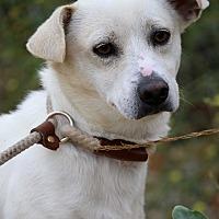 Adopt A Pet :: Cooper - Fillmore, CA
